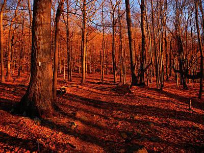 Photograph - Appalachian Trail New York's Green Pond Mountain by Raymond Salani III
