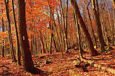 Photograph - Appalachian Trail South Of Culver Gap by Raymond Salani III