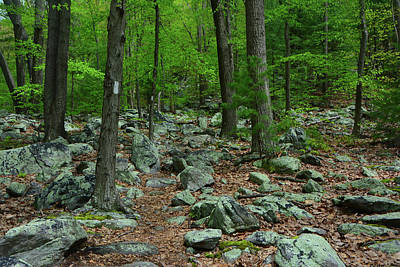 Photograph - Appalachian Trail With Moss Covered Rocks by Raymond Salani III