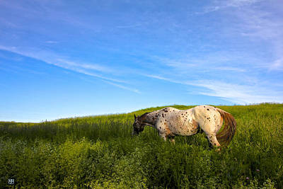 Photograph - Appaloosa Field And Sky by John Meader