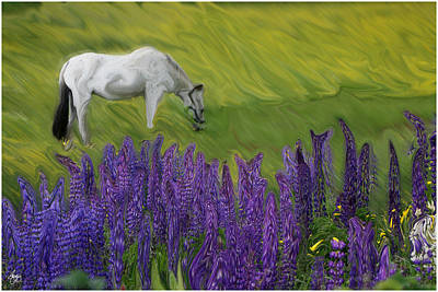 Photograph - Appaloosa Freedom by Wayne King
