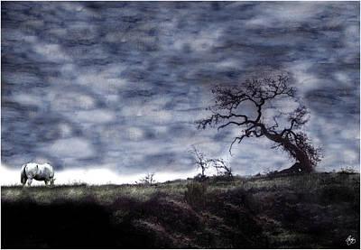 Photograph - Appaloosa Grazing Beneath California Oak by Wayne King