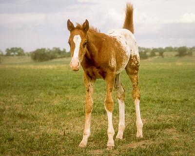 Photograph - Appaloosa Horse Looking Surprised by John Brink
