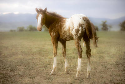 Photograph - Appaloosa Horse  On Ranch by John Brink