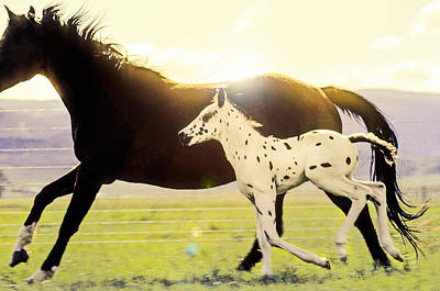 Photograph - Appaloosa Horse Running On Ranch by John Brink