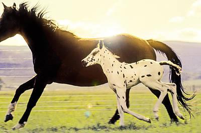 Photograph - Appaloosa Horse Running On Ranch by John Brink