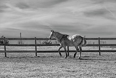 Photograph - Appaloosa by Jean Haynes