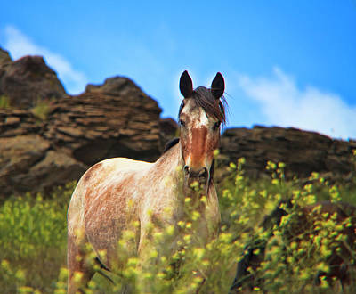 Photograph - Appaloosa Mustang In The Wild. by Waterdancer