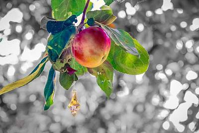 Photograph - Apple And The Diamond by Sven Kielhorn