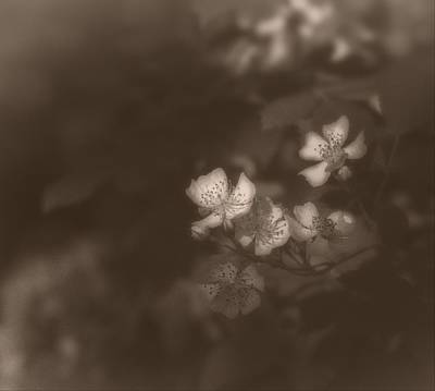 Photograph - Apple Blossom 1 by Simone Ochrym