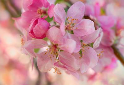 Photograph - Apple Blossom 12 by Leland D Howard