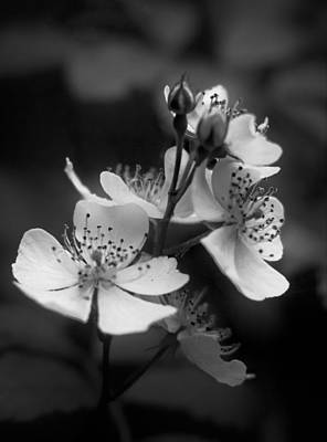 Photograph - Apple Blossom 2 by Simone Ochrym