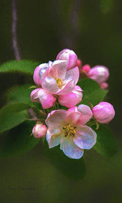 Digital Art - Apple Blossom 2 by Trey Foerster
