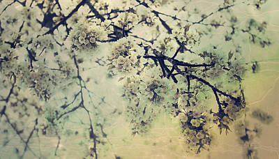 Susann Serfezi Wall Art - Photograph - Apple Blossom by AugenWerk Susann Serfezi