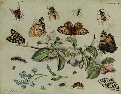 Grasshopper Painting - Apple Blossom Branch Between Butterflies And Insects by Jan van Kessel