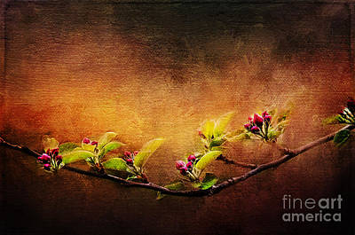 Painting - Apple Blossom Branch by Christina VanGinkel