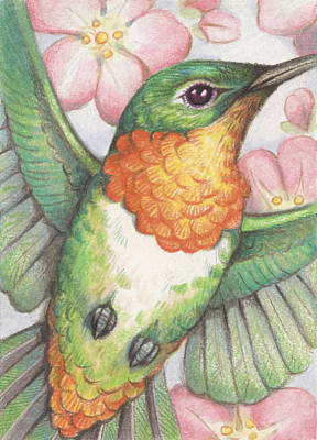 Hummingbird Drawing - Apple Blossom Hummer by Amy S Turner