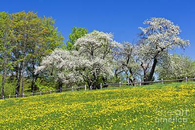 Photograph - Apple Blossom Landscape by Alan L Graham
