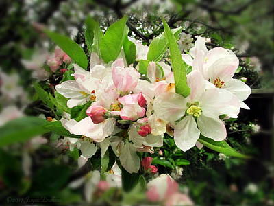 Photograph - Apple Blossom Plethora by Joyce Dickens