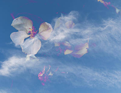 Photograph - Apple Blossom Sky by Kathryn Bell