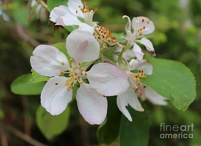 Painting - Apple Blossom Special by Barbara Griffin