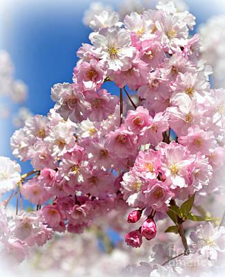 Photograph - Apple Blossom Special by Miriam Danar