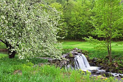Photograph - Apple Blossom Spring by Alan L Graham