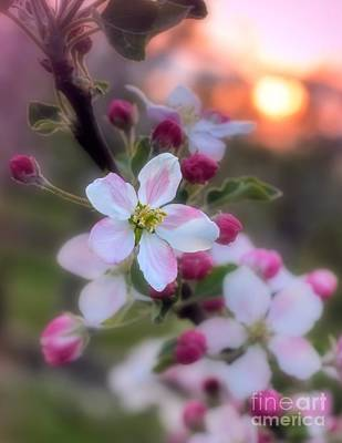 Photograph - Apple Blossom Sunrise by Henry Kowalski