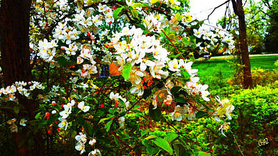 Photograph - Apple Blossom Time by CHAZ Daugherty