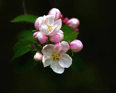 Photograph - Apple Blossom Time by Trey Foerster