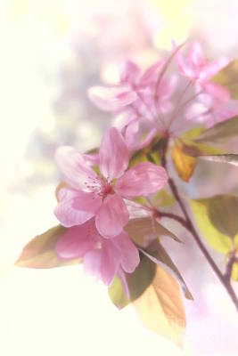 Photograph - Apple Blossoms 2 by Tara Shalton