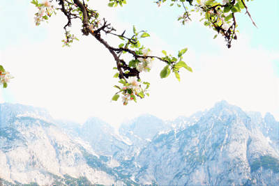 Photograph - Apple Blossoms And Mountains by Brooke T Ryan