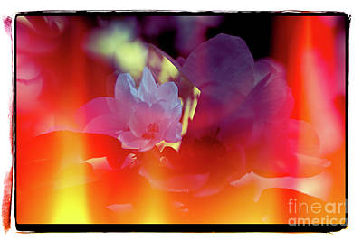 Photograph - Apple Blossoms by Elaine Hunter