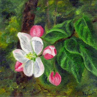 Painting - Apple Blossoms by FT McKinstry