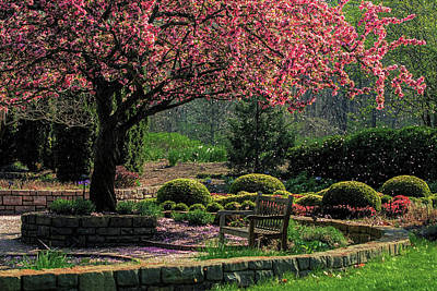 Photograph - Apple Blossoms In The Park by Ron Grafe