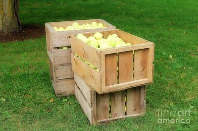 Farm Photograph - Apple Boxes by Anthony Djordjevic
