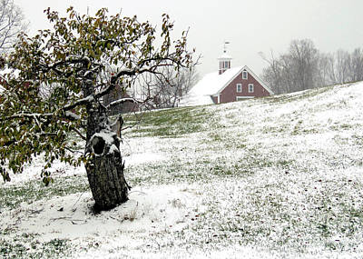 Photograph - Apple Farm In Winter by Janice Drew
