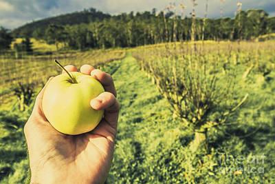 Apple Grower In Cradoc Tasmania Art Print