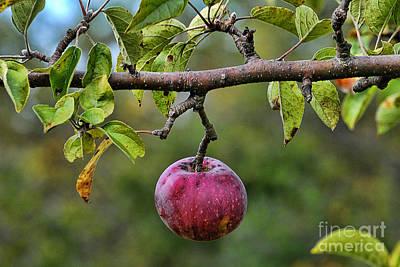 Apple Harvest 2 Art Print by Edward Sobuta