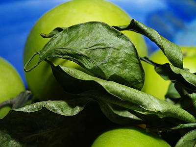 Photograph - Apple Leaves by Michael Canning