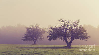 Photograph - Apple Orchard In The Fog by Edward Fielding