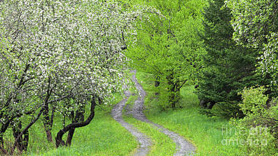 Photograph - Apple Orchard Path 2 by Alan L Graham