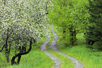 Photograph - Apple Orchard Path by Alan L Graham