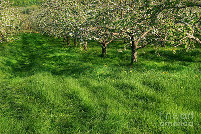 Perspective Digital Art - Apple Orchard by Sandra Cunningham