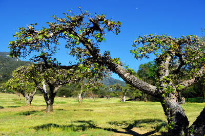 Oak Apple Day Photograph - Apple Orchards Of Oak Glen by Glenn McCarthy