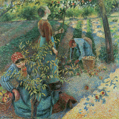 Vegetables Painting - Apple Picking by Camille Pissarro