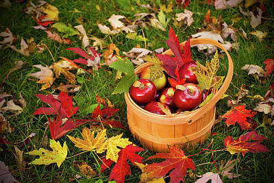 Photograph - Apple Picking Time by Kristina Austin Scarcelli