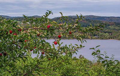 Photograph - Apple Picking Time by Roger Lewis