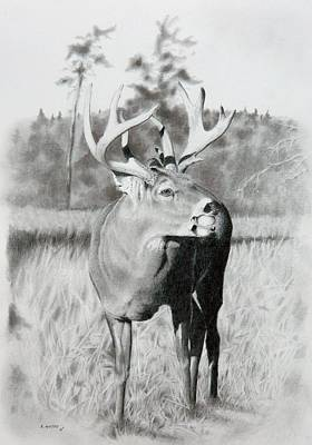 Whitetail Deer Drawing - Apple Snack by Stan White