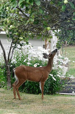 Photograph - Apple Thief by Bill Linn